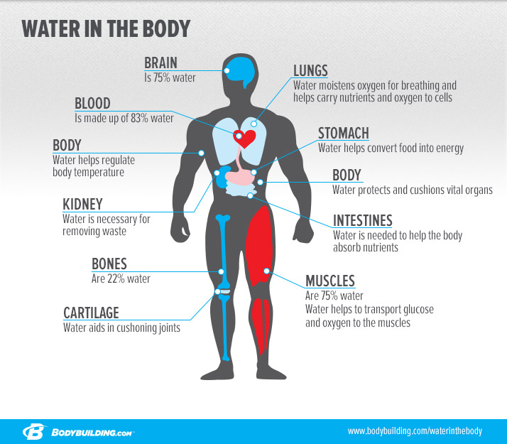 watter-in-the-body_infographic